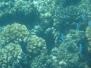 Fiji 2017 - Unterwasserwelt